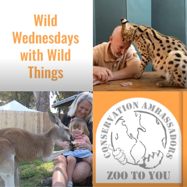 Wild Wednesdays logo